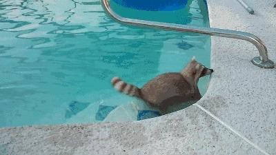 Эй, а ну ка хватит плавать, пошли домой