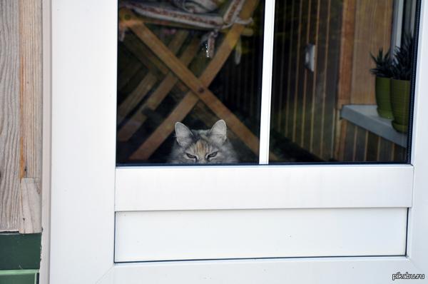 Выпустила крыс побегать по траве, а кошку заперла дома. Этот взгляд.