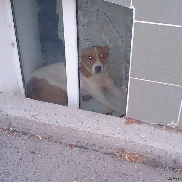 """Продолжение банкета, крутой пёс, мне он очень нравится :D Предыдущий пост <a href=""""http://pikabu.ru/story/ekhal_na_velike_i_uvidel_krutogo_pesika_3523271"""">http://pikabu.ru/story/_3523271</a>"""
