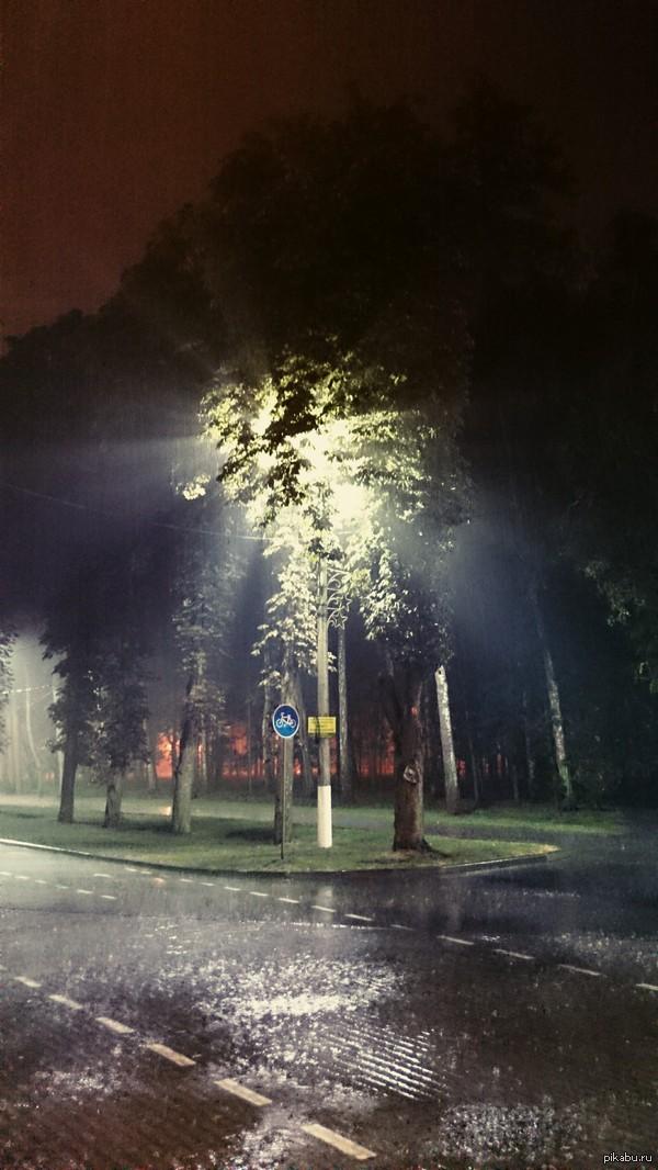 Светящееся дерево. Противной дождь и фонарь творят чудеса.:)