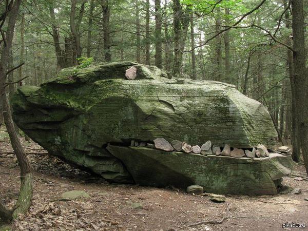 """Во время похода, друг нашел вот такого """"динозавра"""""""