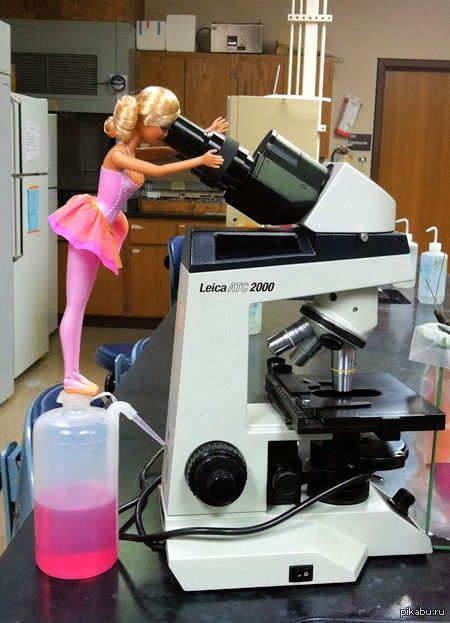 lab report on the microscope