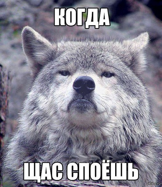 И снова волк Вроде не было