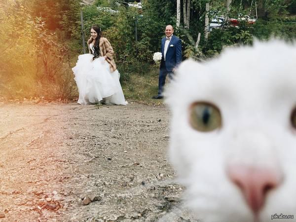 как сэкономили на фотографе или тот момент, когда ты кот и снимаешь свадьбу своих хозяев