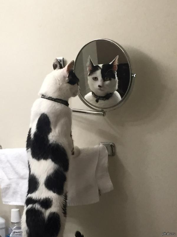 Этот взгляд... когда в следующей жизни - стал котом.
