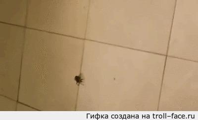 Что будет, если раздавить беременную самку паука. Особо впечатлительным не смотреть.