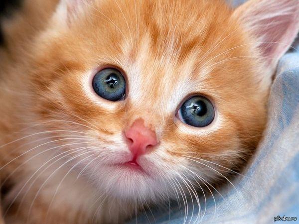 Пост могли понять превратно. Вот вам котенок.