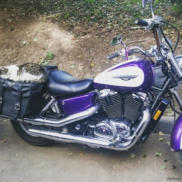 парень на мотоцикле познакомится с девушкой