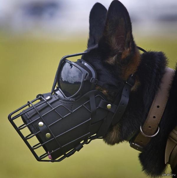 Овчарка из корпуса морской пехоты K9 в защитной маске Такие надевают перед прыжком с парашютом