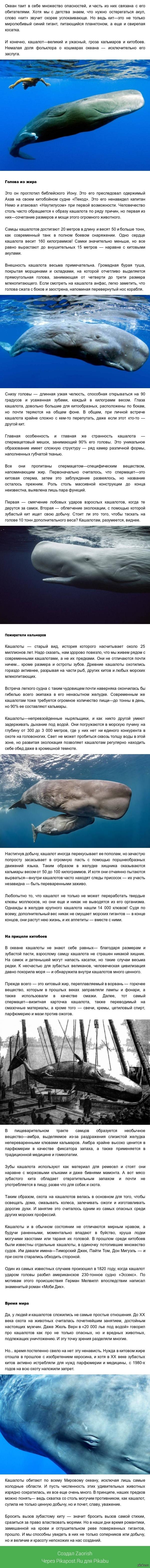 Кашалоты - титаны океана