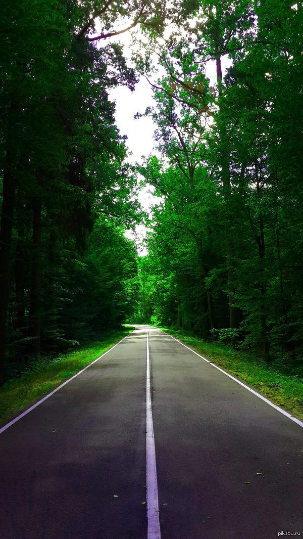 Дорога в лес кликабельно