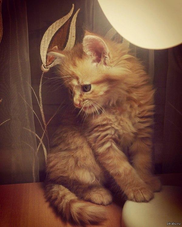 Настало время умилительный историй Косплей на кота с лампой