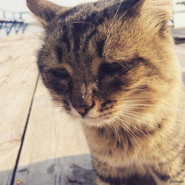Грустный котейка :( Что же с нами стало