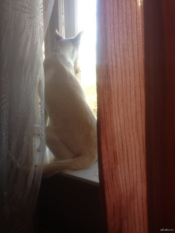 Ваниль Она сидела на подоконнике, смотрела в окно и вспоминала его, не хватало только кофе и сигарет....