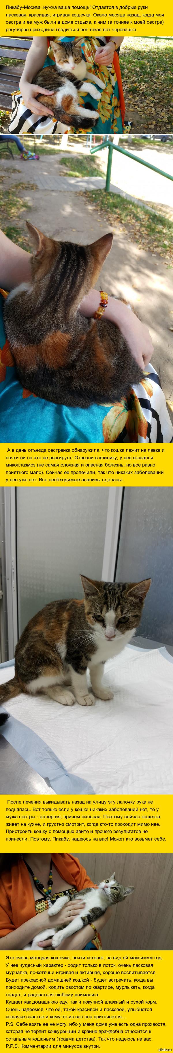 Помогите котейке найти дом! [Москва] История простая: нашли кошку, вылечили, себе оставить не можем. Помогите пристроить, пожалуйста.