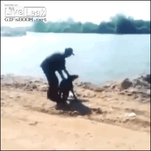 Поделом Или контр атака собаки