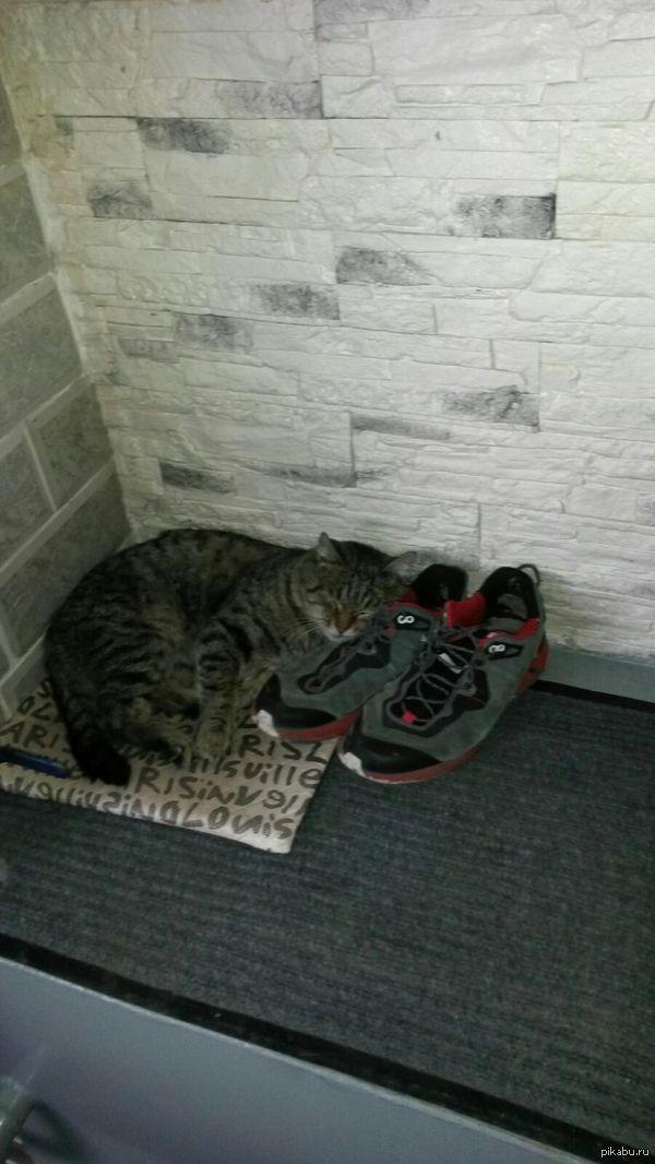 Мой кот, когда я на работе. Вот так мой усатый друг компенсирует моё отсутствие.  Подобрал котенка на помойке. Вырос бандитом и дамским угодником. Но когда бывает дома, самый добрый кот.