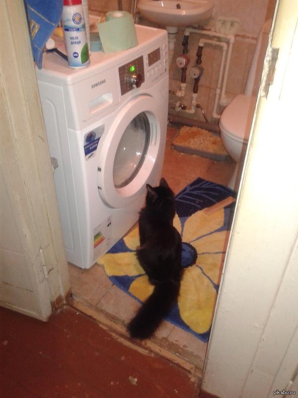 Кот соседа любит смотреть в телевизор Кота звать Пиначет
