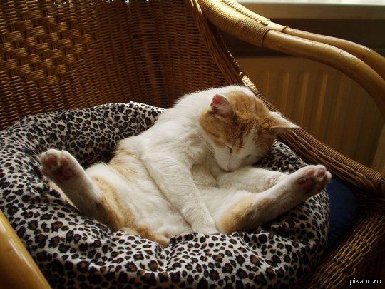 Тут был баян, а теперь спит кот