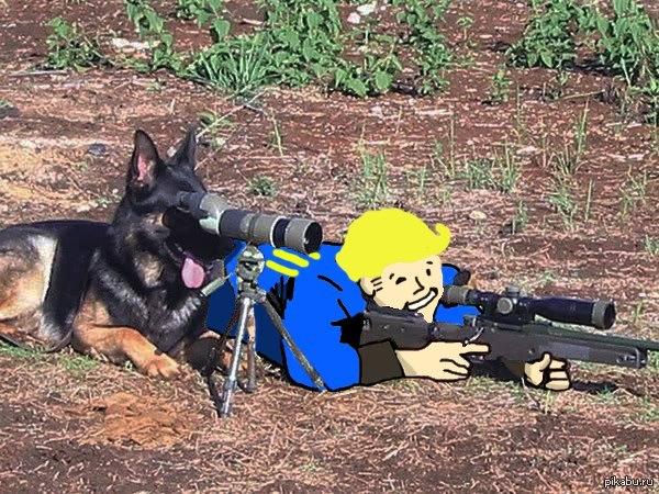 Немного Fallout 4 Пёс всегда поможет =Р