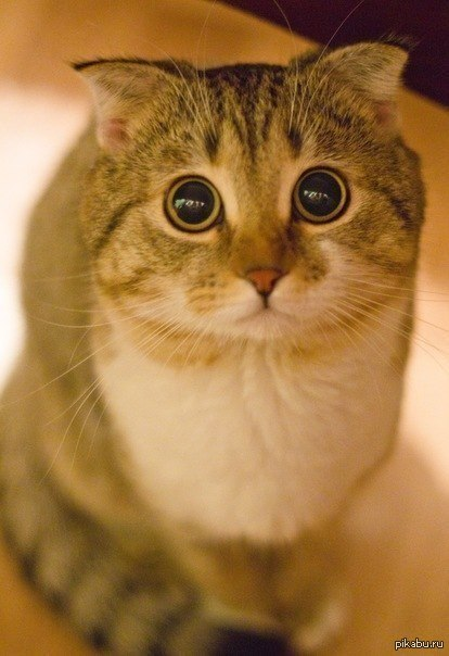 тут был баян, вот вам котик