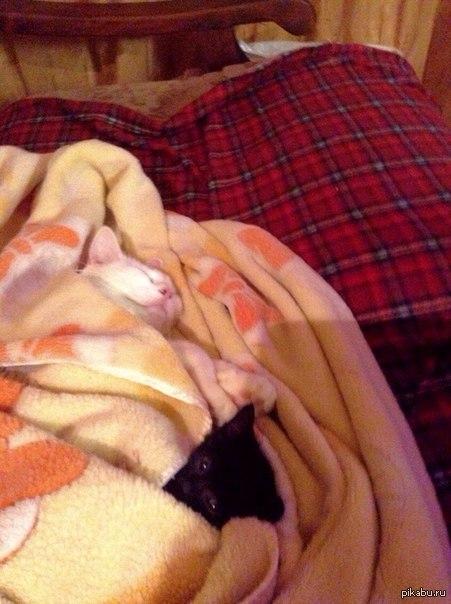 Когда в доме отключили отопление П.С. Отобрали одеялку и закопались сами.
