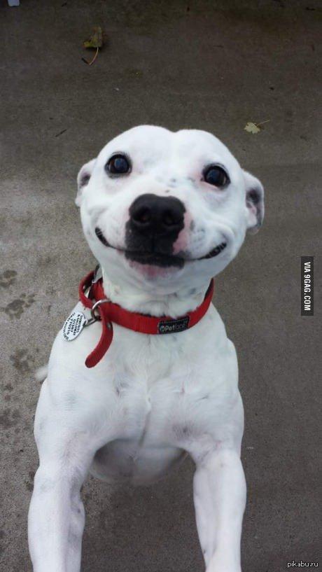 Даже собака улыбается милее, чем я