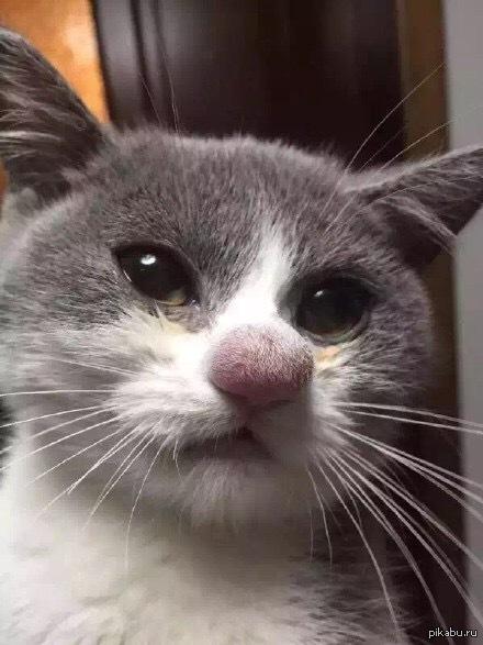 Cat bites man