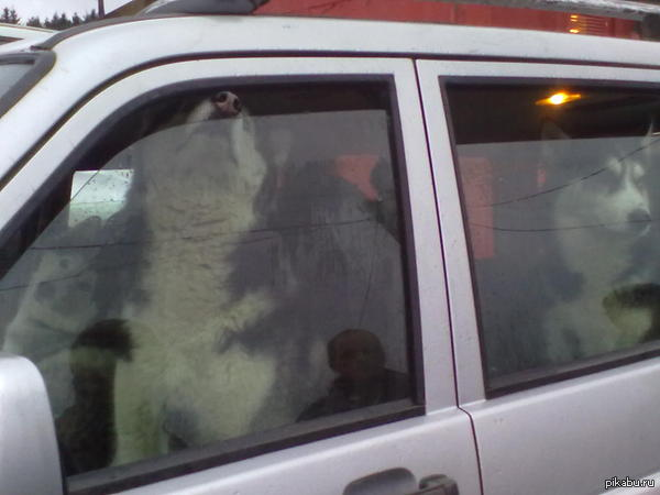 Собакены на УАЗике встретил такую компанию на работе, фото на nokia c5230