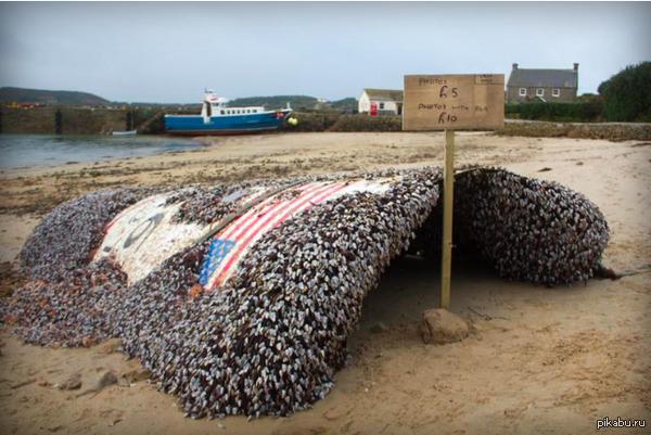 Большой кусок ракеты Falcon 9, потерпевшей крушение 5 месяцев назад, нашли у берегов Великобритании