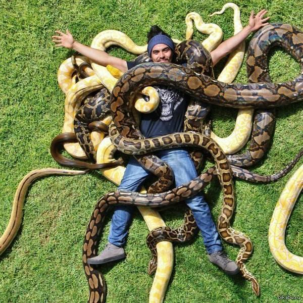 возможности сонник 2 маленькие змеи видов