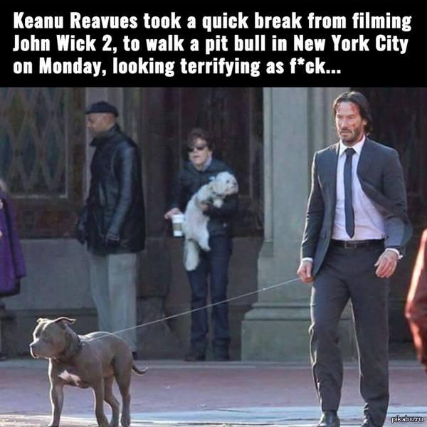 Просто Киану гуляет с собачкой в NY между съемками Джона Уика 2