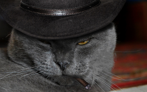 Котики  с запятнанными душами Кот, Гангстер, Я фотошоплю как дебил, Photoshop, Фотошоп мастер