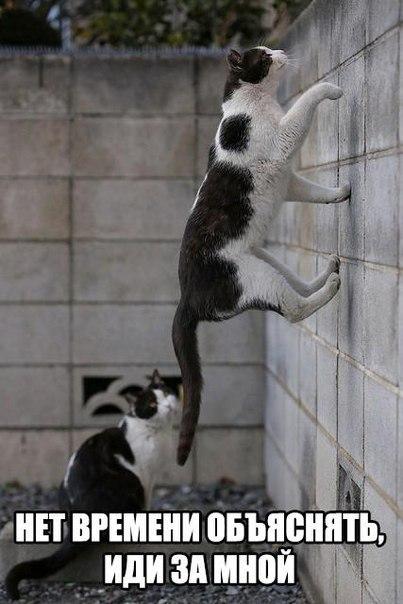 Коты... Кот, Нет времени объяснять