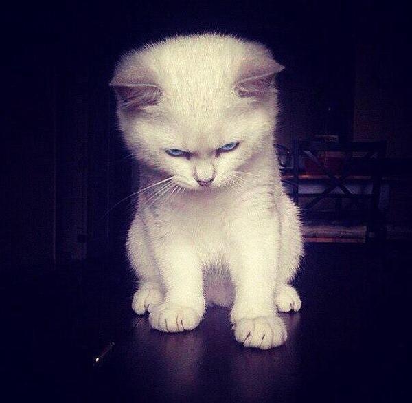 angry wet kitten - 750×733