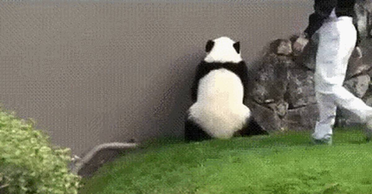 Гифка пьяная панда