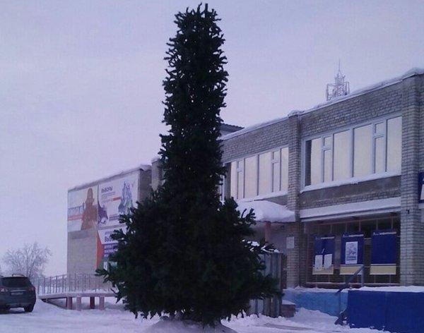 В Ноябрьске установили новогоднюю елку.