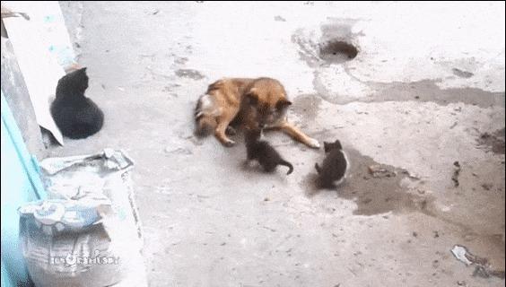 Кошка с котятами встретила своего старого друга. ) Кот, Собака, Дружба, Встреча, Гифка, Видео