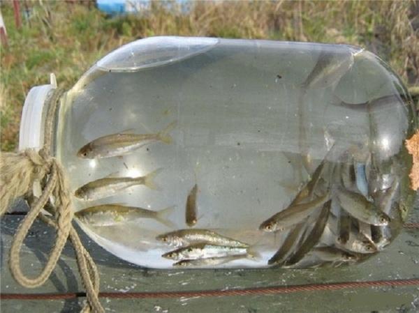 как сохранить малька для рыбалки Ушаковская набережная, Продажа