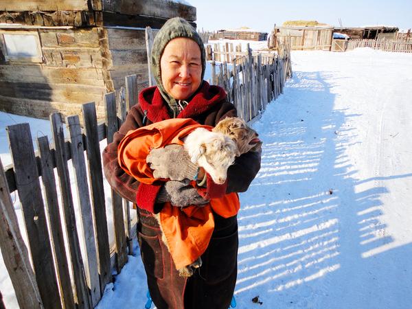 Встретил бабушку с козлятами. Один серый, другой белый (Казахстан)