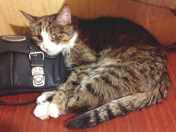 Старость Шерстяной старожил, Кот, Защита животных
