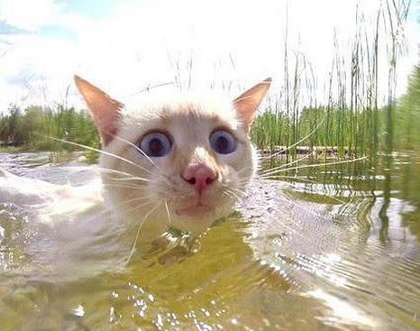 Когда плаваешь и что то задевает твою ногу.