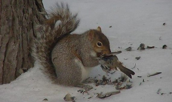 Когда кончились орешки.