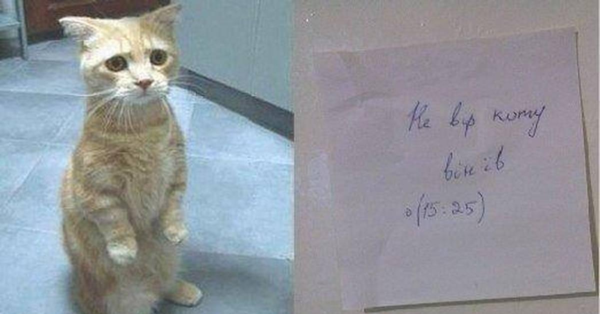 Картинка не верь коту его кормили которая