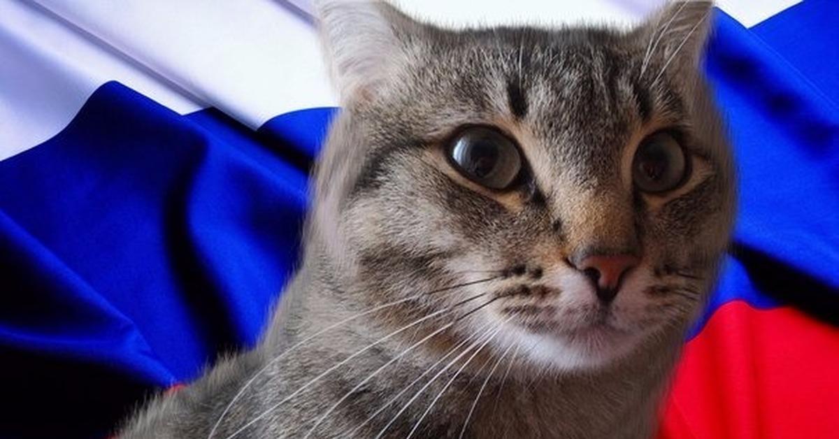 с днем россии коты решению суда