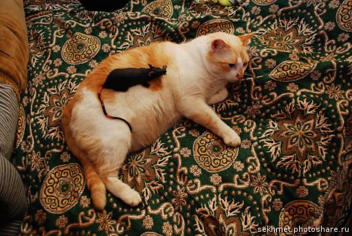 Кот скучает по умершему коту