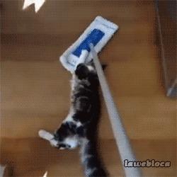 kitten play jess