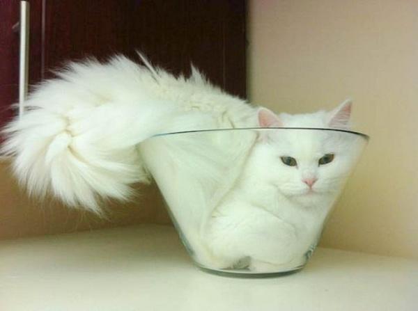 Ученый стал обладателем Шнобелевской премии, доказав, что кошки – это жидкость Шнобелевская премия, Кот, Наука, Новости