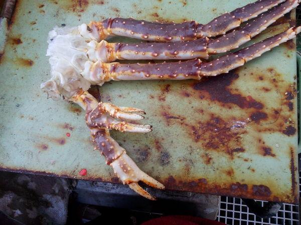 Вот такой вот попался краб во время работы в море.
