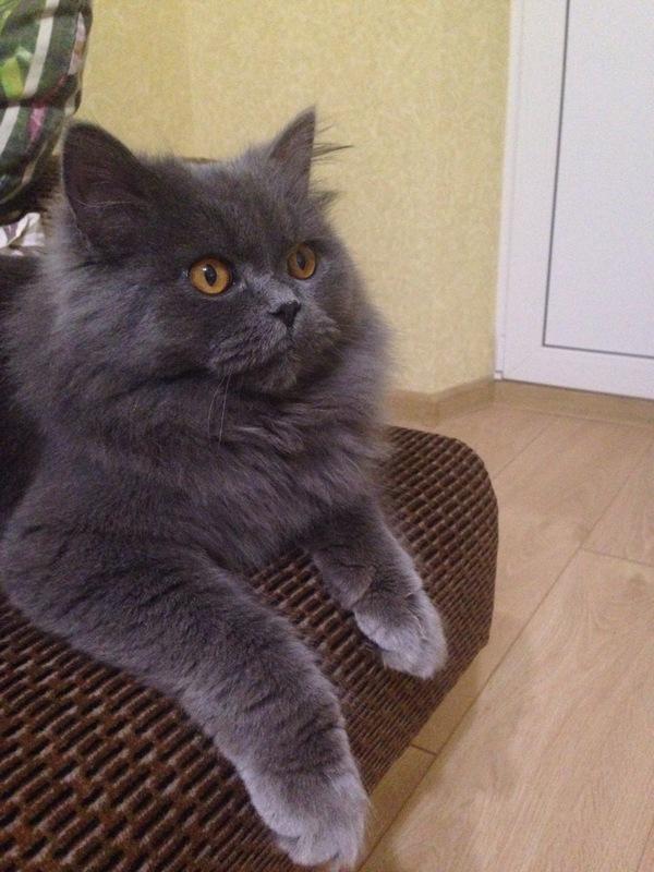 Вот такой друг ждал нас у порога Кот, Котики победят, Кошатники, Найдено, Пополнение, Домашние животные, Длиннопост
